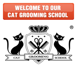 Cat grooming school banner
